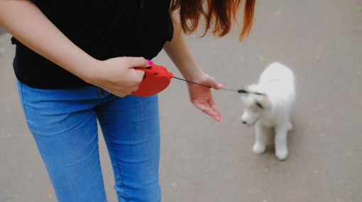 Essential formulas for dog parents never walk a dog on a retractable leash