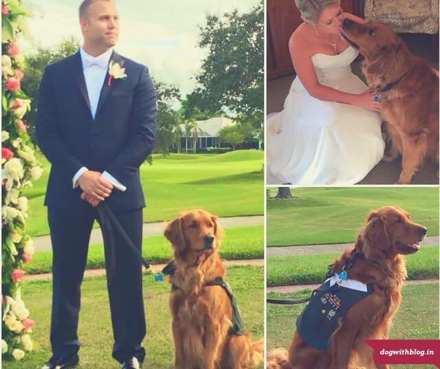dog best man wedding