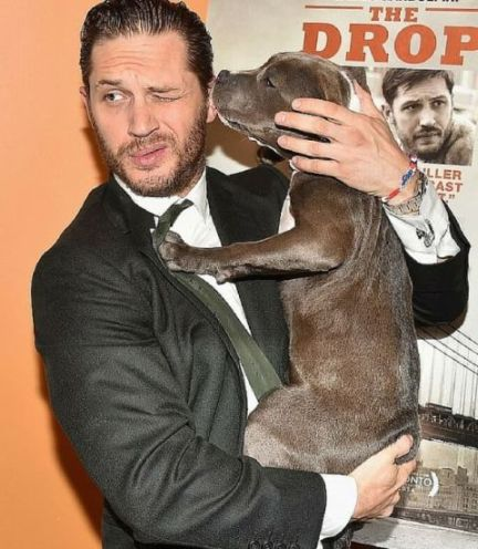 Tom hardy the drop puppy