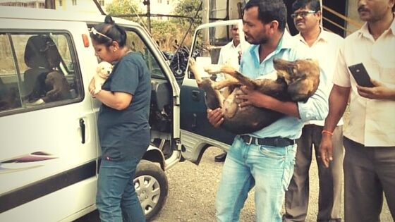 Ambulance For Stray Dogs