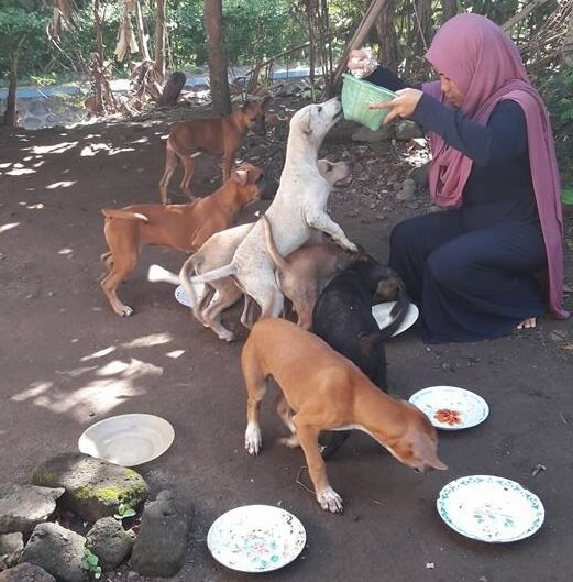 muslim woman feeds dogs indonesia