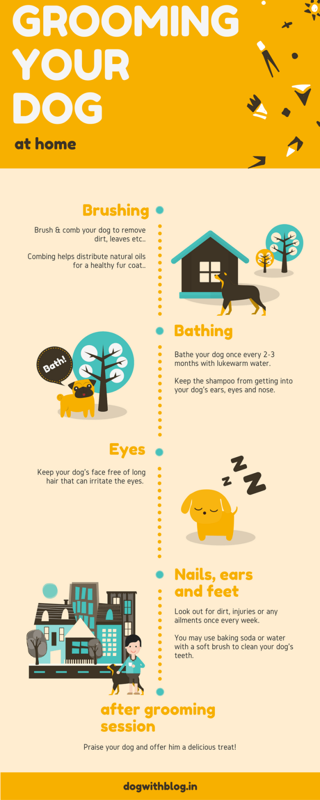 groom your dog infographic