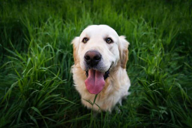 natural treatment dogs