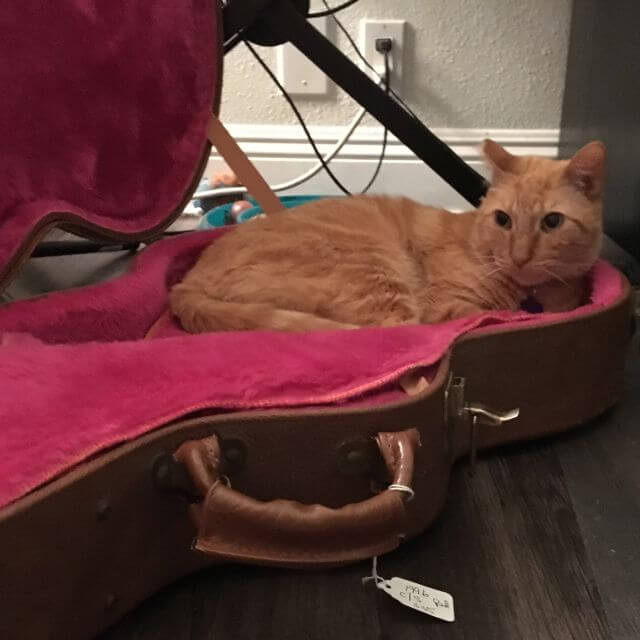 cat in guitar box