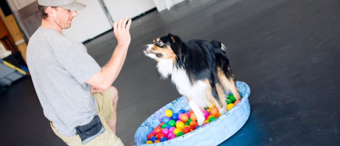 Loretta - D.O.G. Obedience Group Trainer