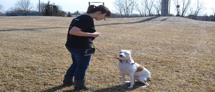 Shawna - D.O.G. Obedience Group - Trainer 4