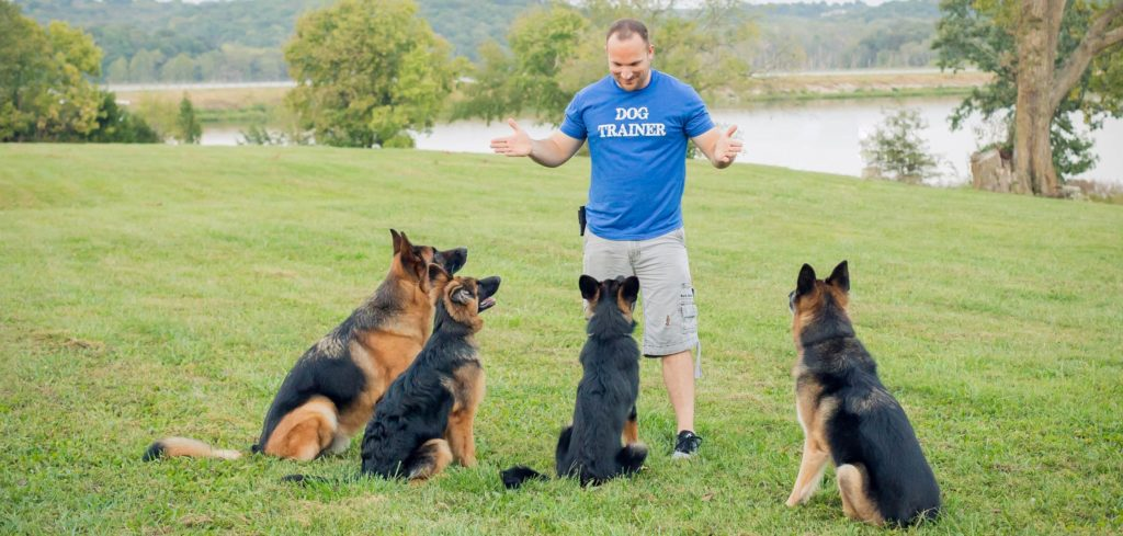 Puppy Training – D O G  Obedience Group