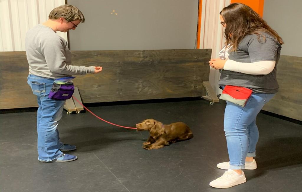 1 on 1 dog training