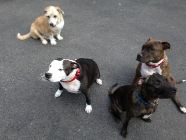 Lester, Chyenne, Jax, Bella