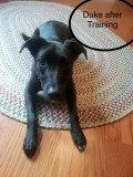 Duke is doing amazing and continues to learn how to keep calm with rules, boundaries, and limtations!