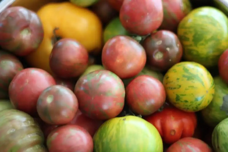 Tomatoes are fun and easy to grow