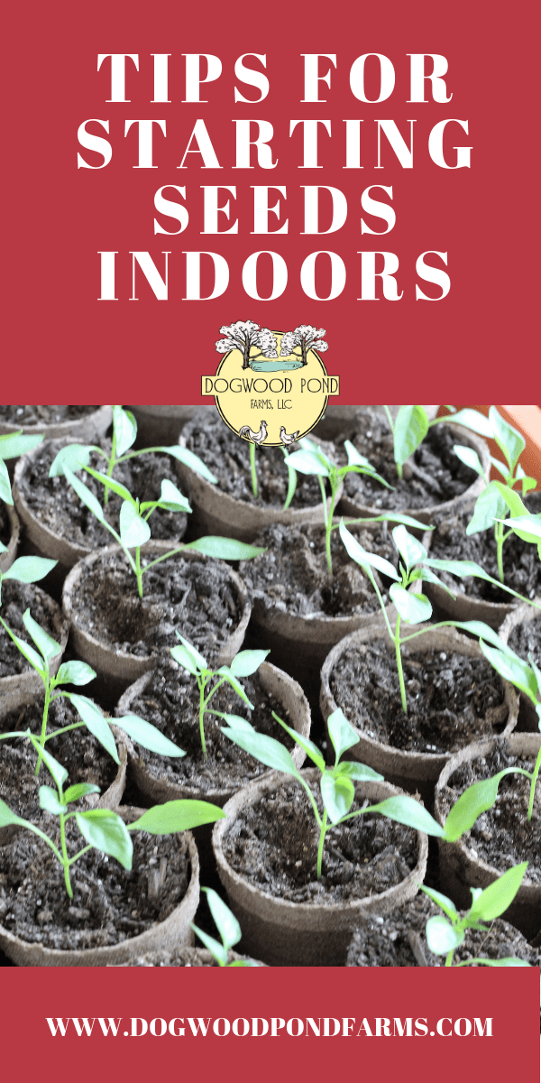 Should you start seeds indoors?