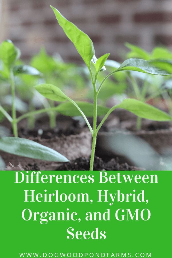 Differences between heirloom, organic, hybrid and gmo seeds.
