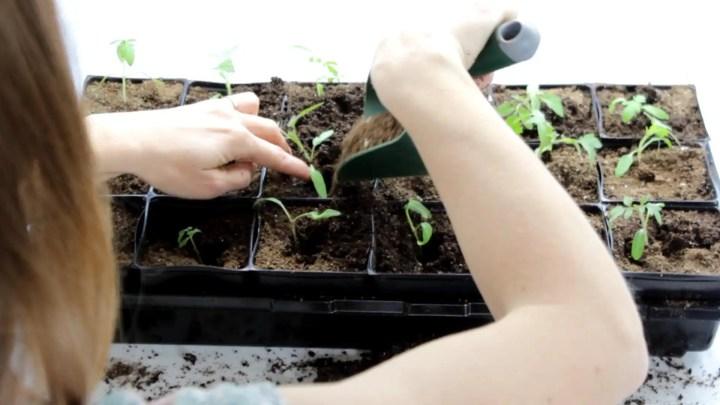 Garden fresh transplants