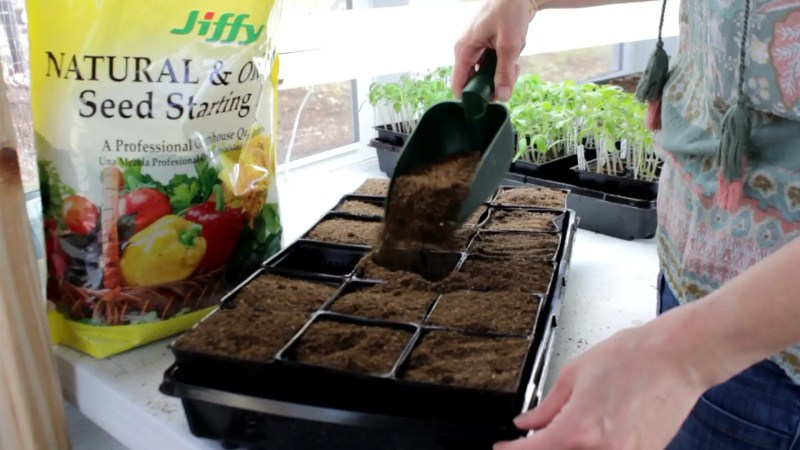Grow healthy vegetables from seed and learn to transplant them