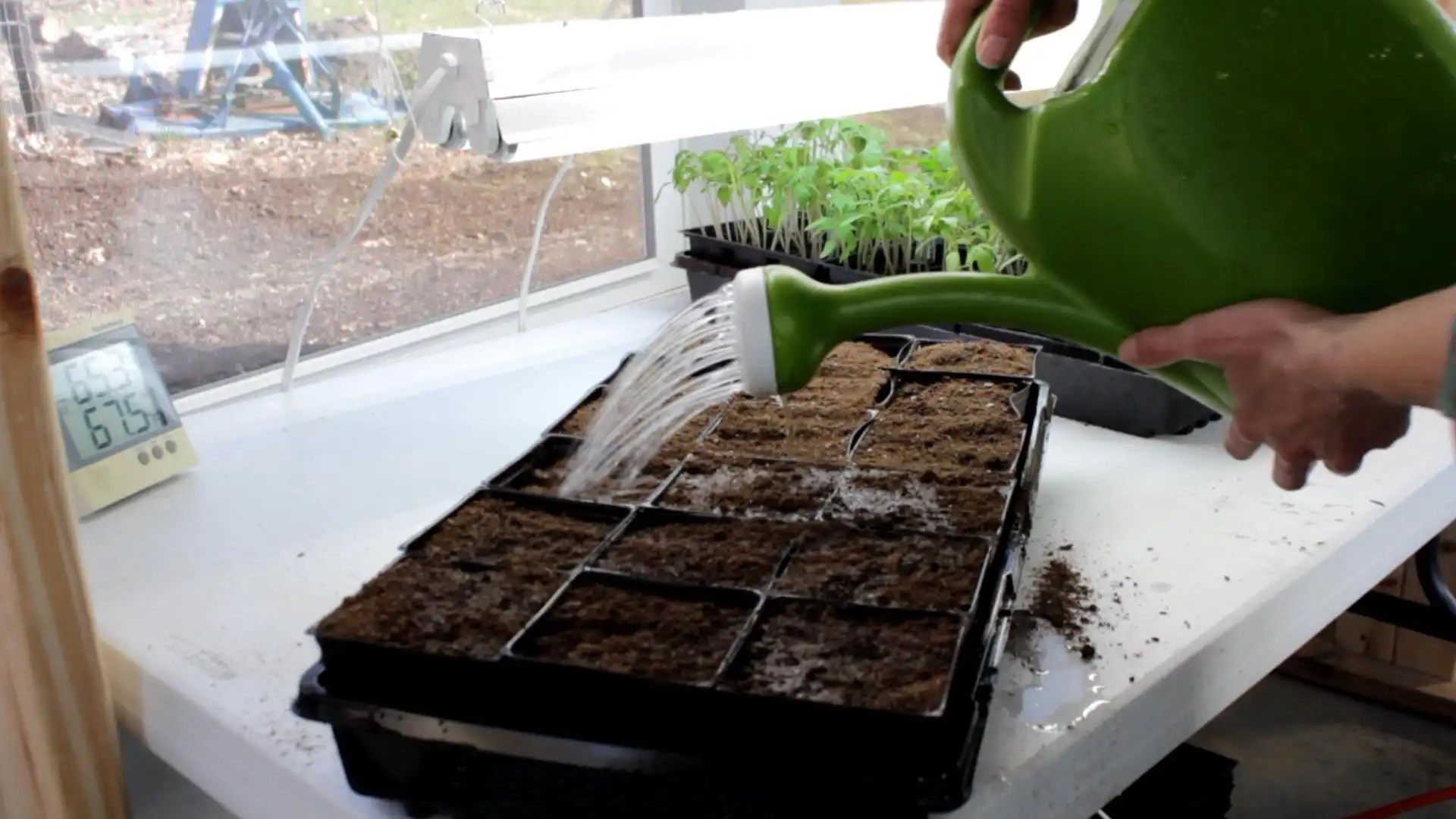 Transplanting seedlings is easy and helps your plants grow healthier