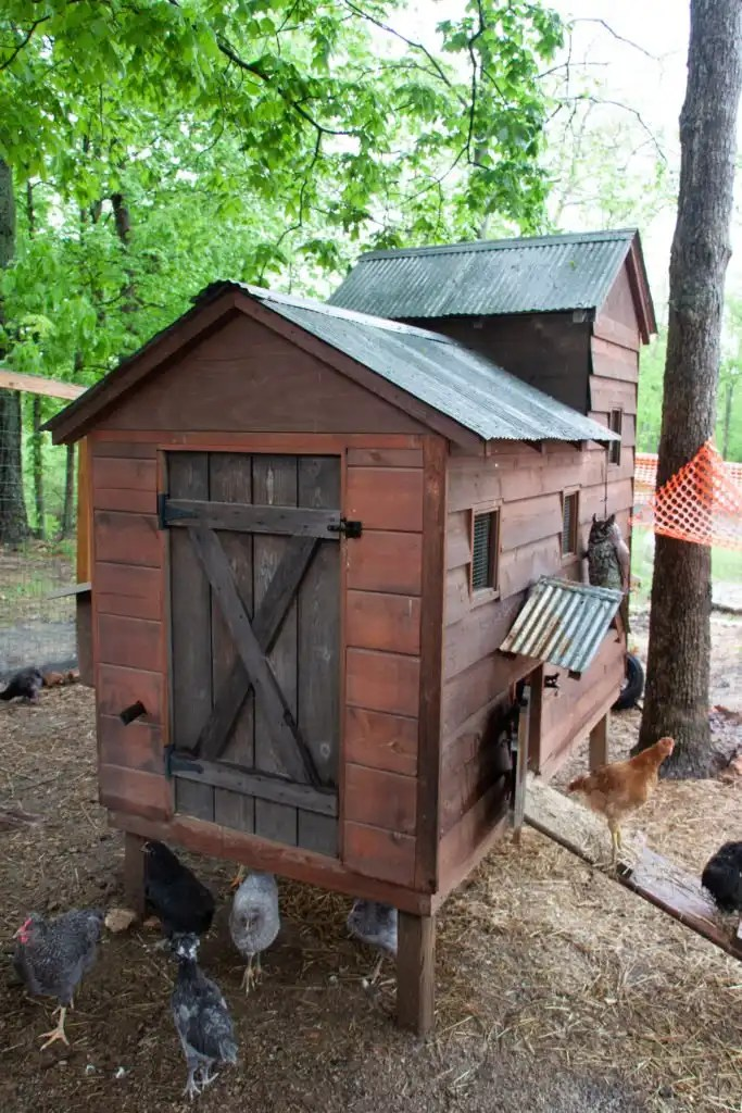 Chicken coop essentials for natural garden living at Dogwood Pond Farms