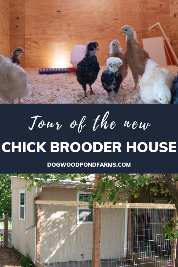 New chick brooder house at dogwood pond farms