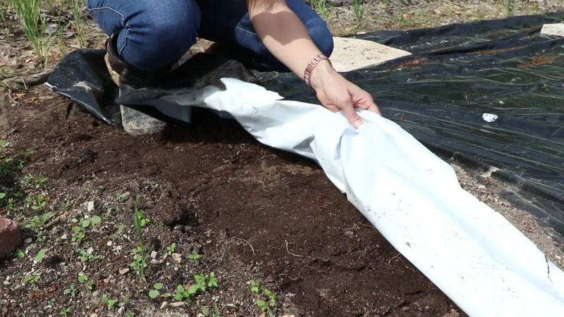 Natural weed control for the vegetable garden