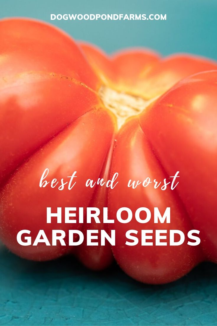 Best heirloom seeds in the garden
