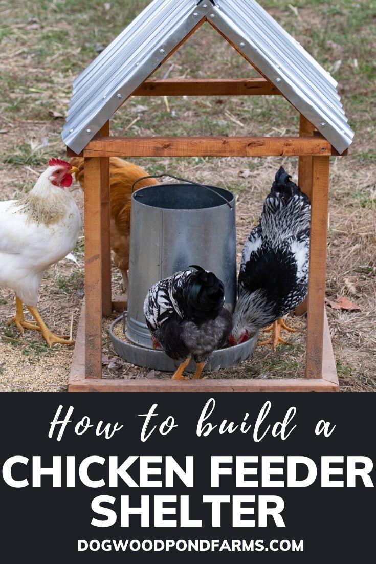 Chicken Feeder Shelter