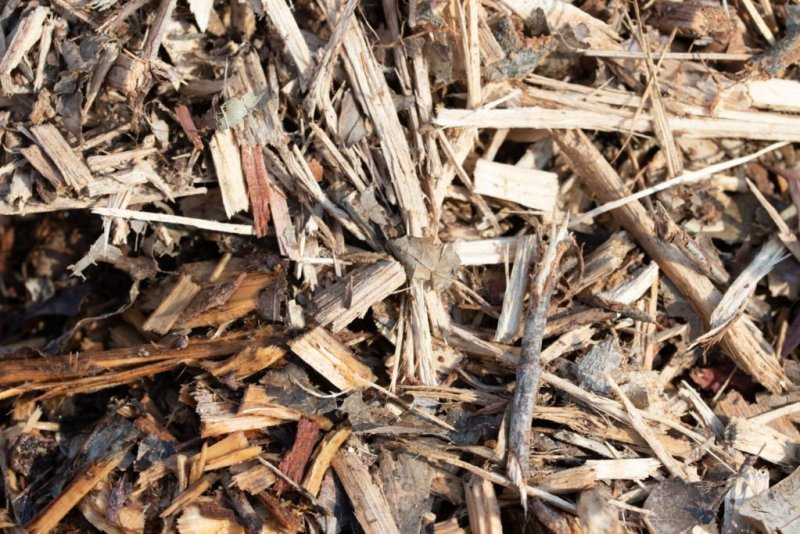 Wood chips are an inexpensive vegetable garden mulch