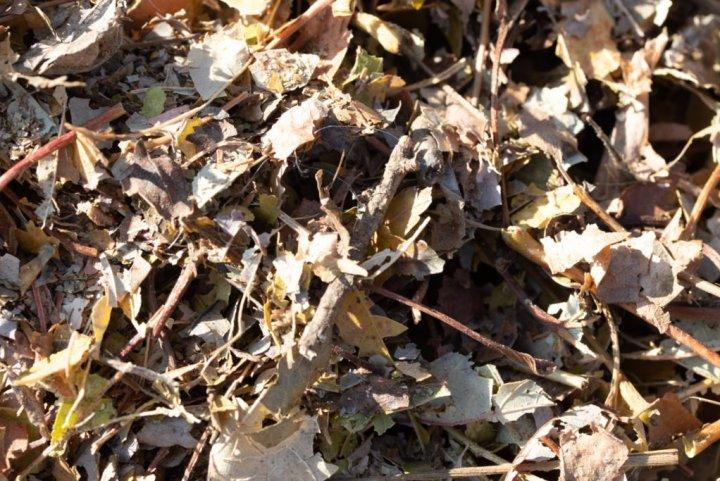 Fall Leaves make good mulch