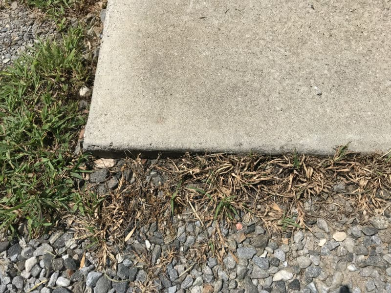 Driveway-2 weeks later