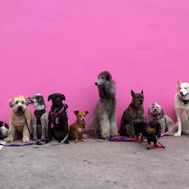 10 perros en fondo rosa