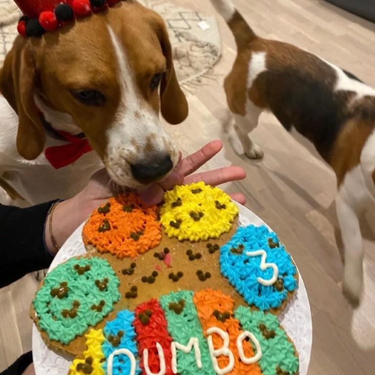 torta-dumbo