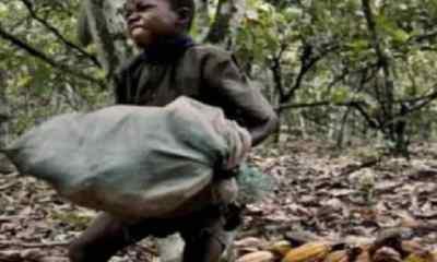 Côte d'IvoireUn film censuré sur la traite des enfants dans le cacao met à mal le pouvoir