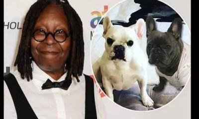 InsoliteWhoopi Goldberg annonce le mariage de son petit chien