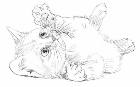 20 Easy Cat Drawing Step By Step Tutorials Simple Cat Sketch