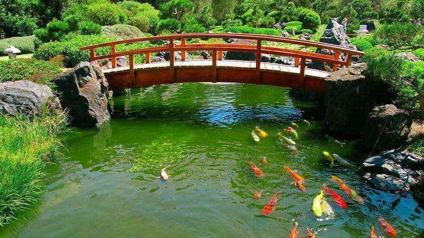 image4-40 | Золотые правила организации японского сада