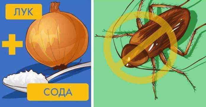 onion-sodium | Сделайте мощное натуральное средство которое избавит вас от тараканов!