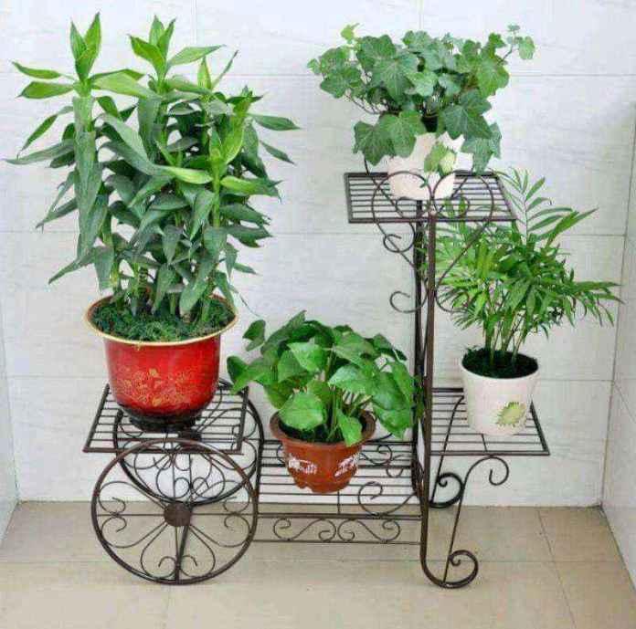 plantas-1   10 великолепных идей для украшения вашего дома растениями которые вам понравятся