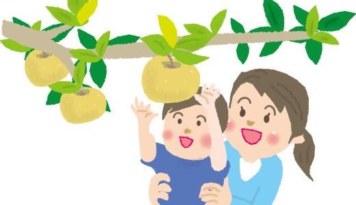 北海道の梨狩りシーズンは?時期と品種を確認!食べ放題情報も!