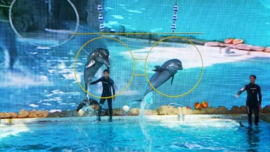 Samudra Dolphin Park Ancol Samudra Dolphin Park Ancol - Dolan Dolen