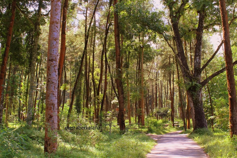 Hutan Pinus Ledok Ombo Malang, Malang, Kota Malang, Dolan Dolen, Dolaners Hutan Pinus Ledok Ombo via MESRA BERKELANA - Dolan Dolen