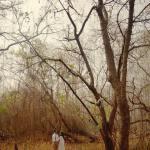 Hutan Kota Srengseng, Jakarta hutan kota srengseng - Dolan Dolen