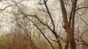 Hutan Kota Srengseng, Hutan Kota Srengseng Jakarta, Jakarta, Dolan Dolen, Dolaners hutan kota srengseng - Dolan Dolen