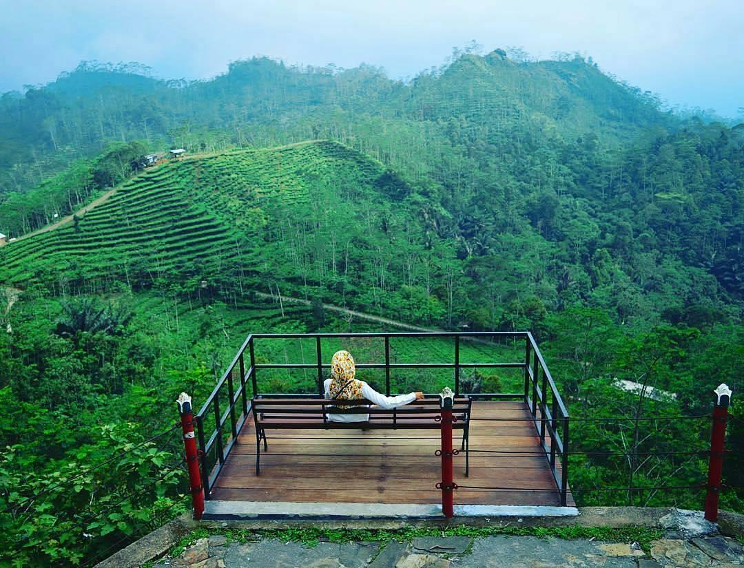 Kebun Teh Nglinggo, Kebun Teh Nglinggo Yogyakarta, Yogyakarta, Dolan Dolen, Dolaners