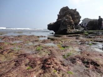 pantai ngeden, saptosari, gunungkidul (83)