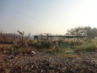 ekowisata mangrove baros kretek bantul (14)