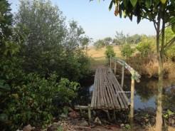 ekowisata mangrove baros kretek bantul (78)