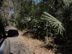 taman nasional baluran banyuwangi, afrika-nya pulau jawa (47)