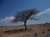 taman nasional baluran banyuwangi, afrika-nya pulau jawa (61)