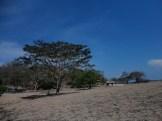 taman nasional baluran banyuwangi, afrika-nya pulau jawa (63)