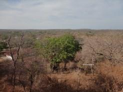 taman nasional baluran banyuwangi, afrika-nya pulau jawa (70)