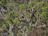 taman nasional baluran banyuwangi, afrika-nya pulau jawa (75)